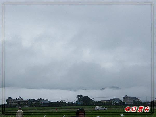 新社花海DSCF2504.jpg