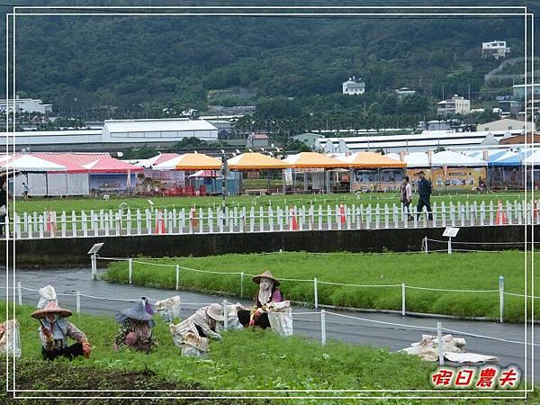 新社花海DSCF2530.jpg