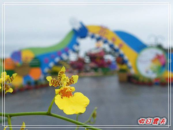 新社花海DSCF2534.jpg