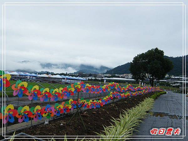 新社花海DSCF2562.jpg