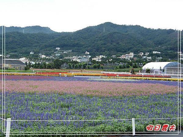 新社花海DSCF2563.jpg