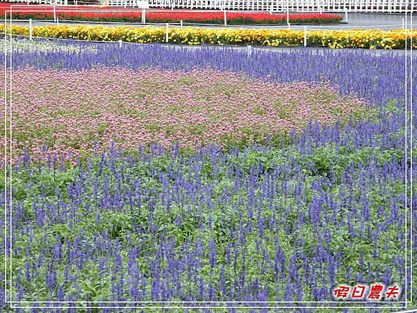 新社花海DSCF2564.jpg