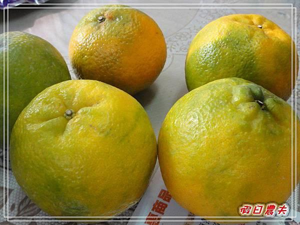 玉山香菇DSC06574.jpg