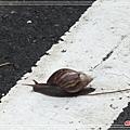 寶來溫泉山莊DSCF1561.jpg