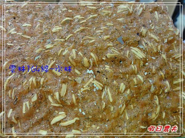 164水林DSC05976.jpg