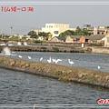164口湖DSC06165.jpg