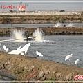 164口湖DSC06168.jpg