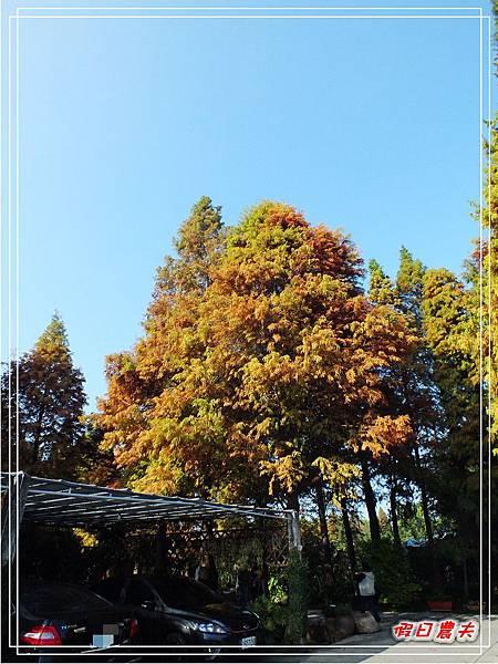 菁芳園DSCF4215.jpg