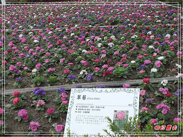 溪州公園DSCF5196.jpg