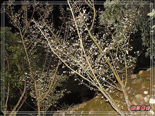 夜光高鐵DSCF4954.jpg