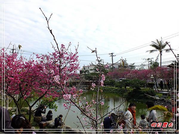 芬園櫻花DSCF8839