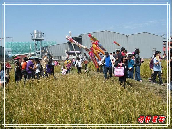 大雅小麥-趙家窯DSCF2701