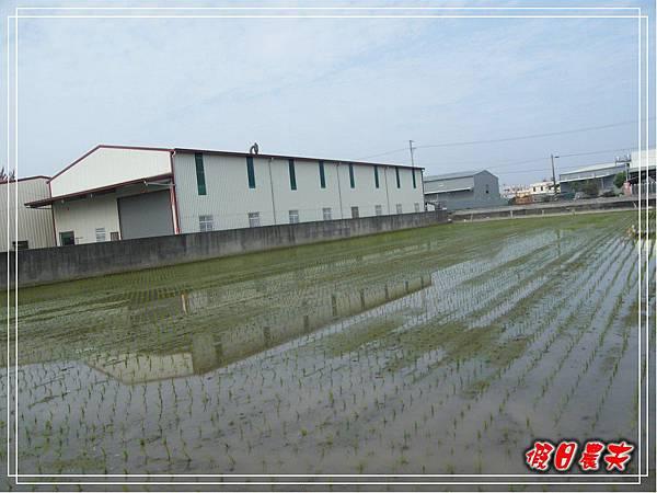 大雅小麥-寶興宮DSCF2592