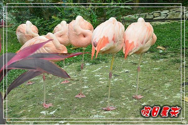壽山動物園DSC_0073