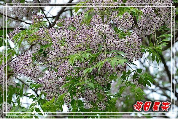 壽山動物園DSC_0076