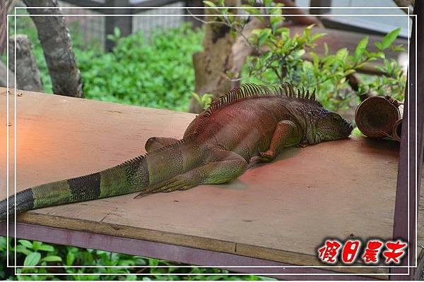 壽山動物園DSC_0082