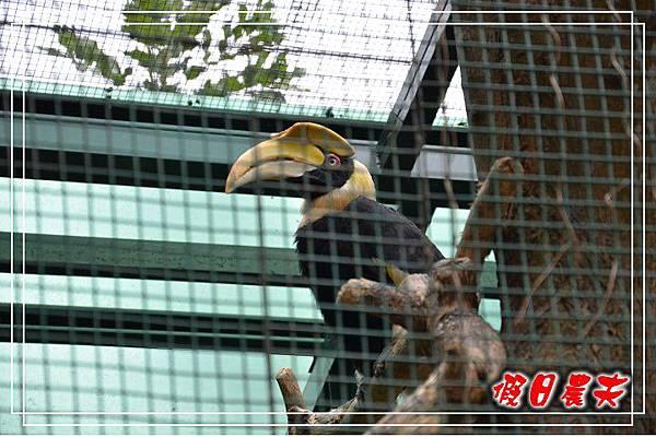 壽山動物園DSC_0087