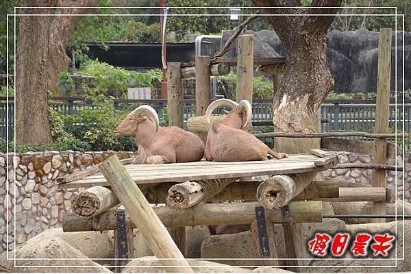 壽山動物園DSC_0088