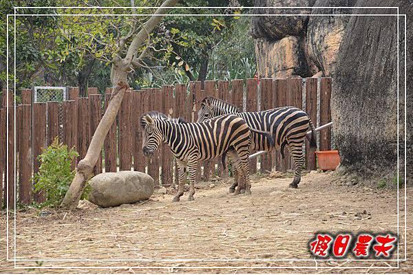 壽山動物園DSC_0089
