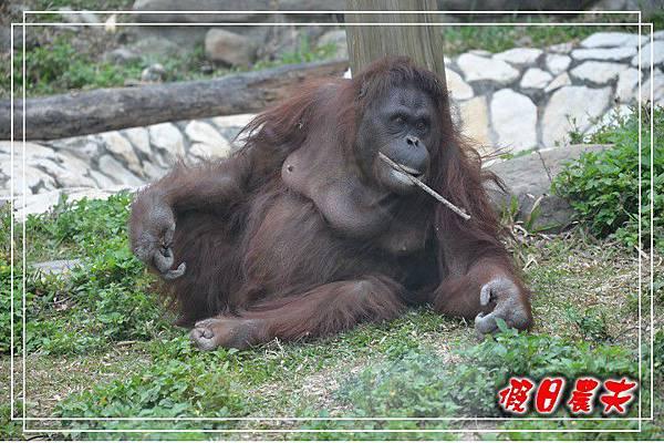 壽山動物園DSC_0125