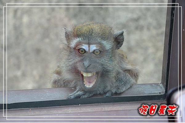 壽山動物園DSC_0133