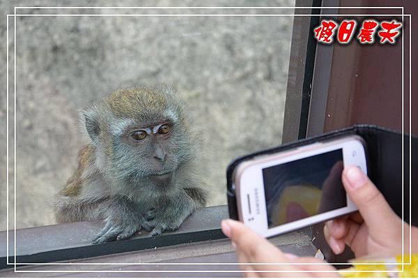 壽山動物園DSC_0130