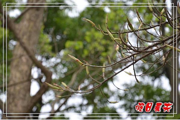 壽山動物園DSC_0163
