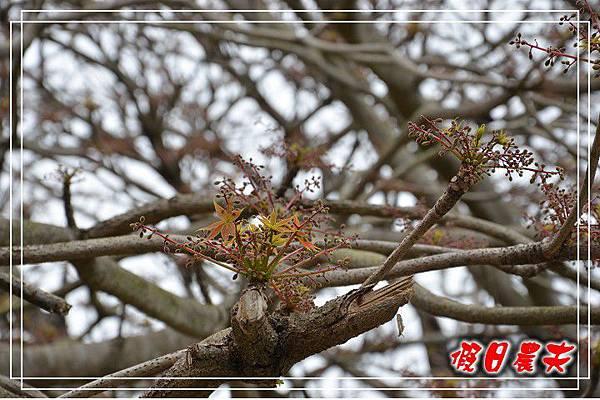 壽山動物園DSC_0177