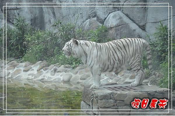 壽山動物園DSC_0182