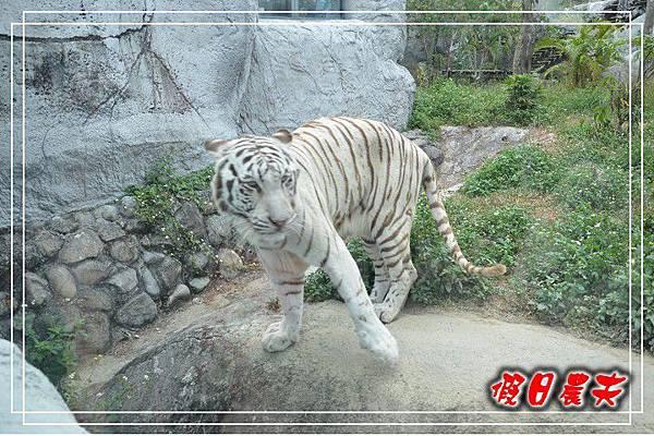 壽山動物園DSC_0186