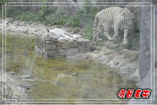壽山動物園DSC_0192