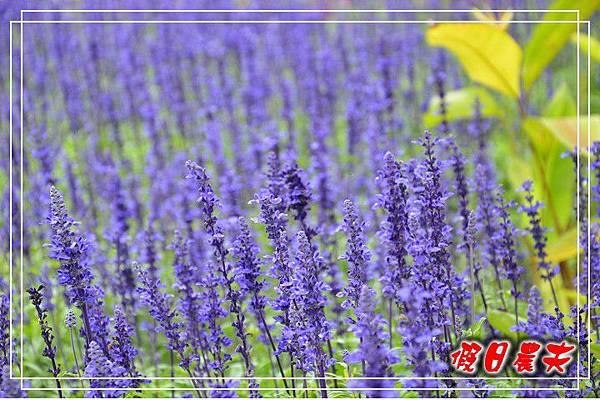 壽山動物園DSC_0196