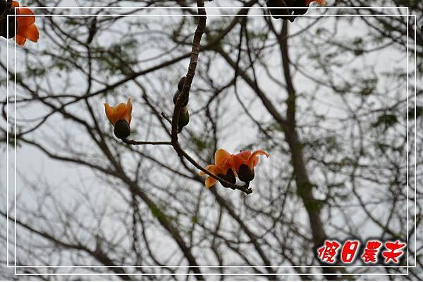 壽山動物園DSC_0201