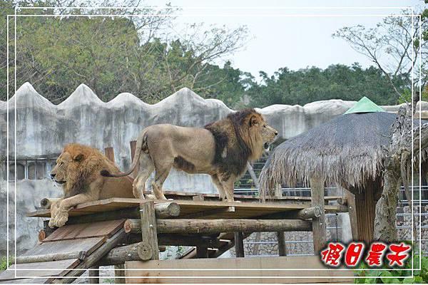 壽山動物園DSC_0224