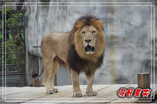 壽山動物園DSC_0228