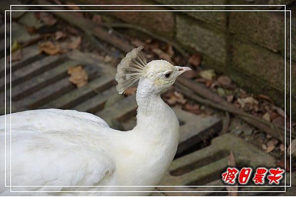 壽山動物園DSC_0233