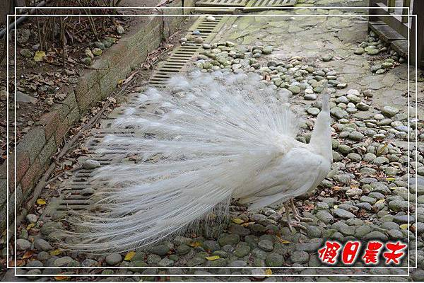壽山動物園DSC_0244