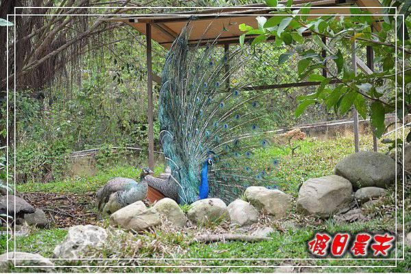 壽山動物園DSC_0251