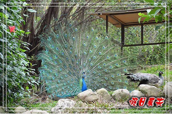 壽山動物園DSC_0258