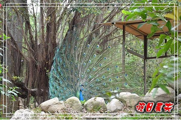 壽山動物園DSC_0262