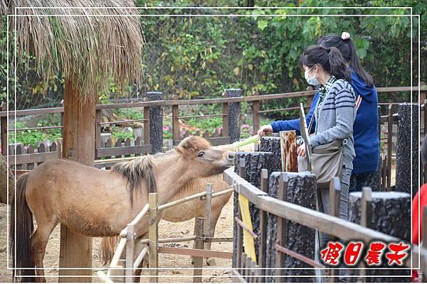壽山動物園DSC_0271