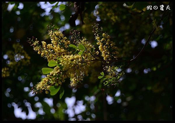 溪州公園DSC_2420