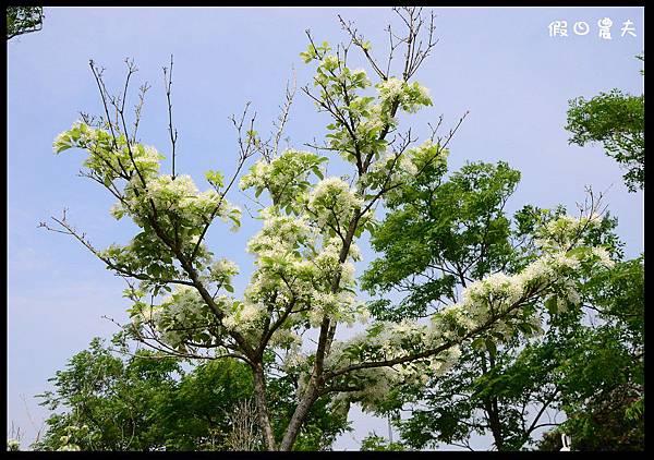 溪州公園DSC_2435