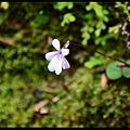 杉林溪DSC_4434