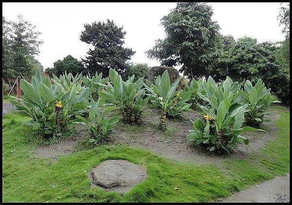 萬景園藝DSC00225