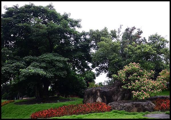萬景園藝DSC_1419