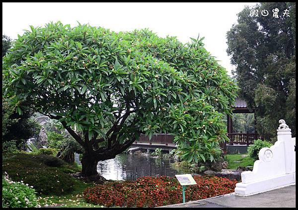 萬景園藝DSC_1421