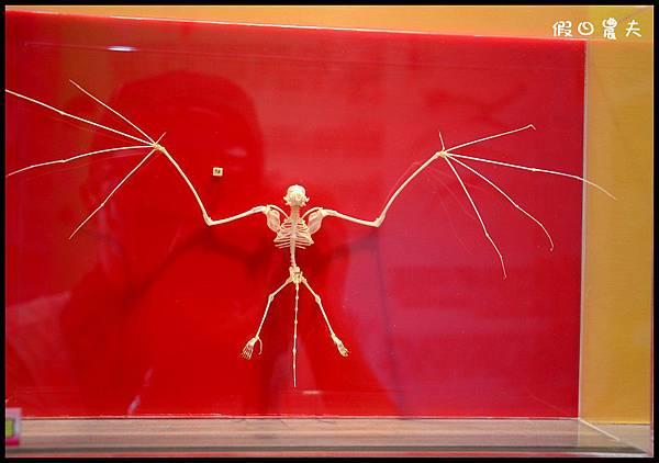 蝙蝠博物館DSC_9158