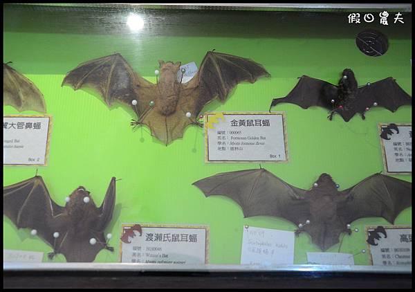 蝙蝠博物館DSC_9159