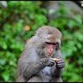 猴園DSC_5405